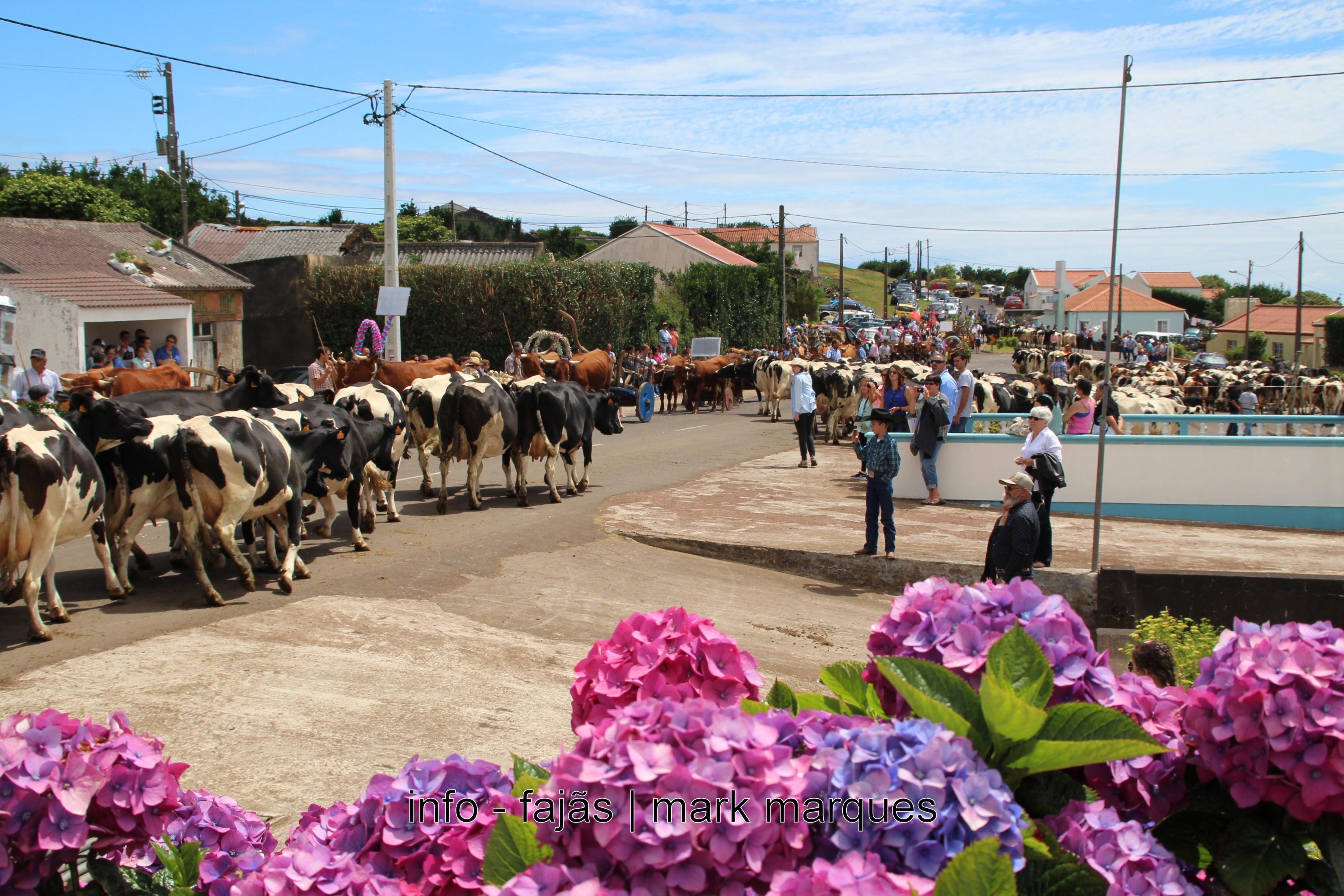 BODO DE LEITE EM SÃO TOMÉ (Santo Antão) (Topo) 3.07.2016. (reportagem fotográfica)