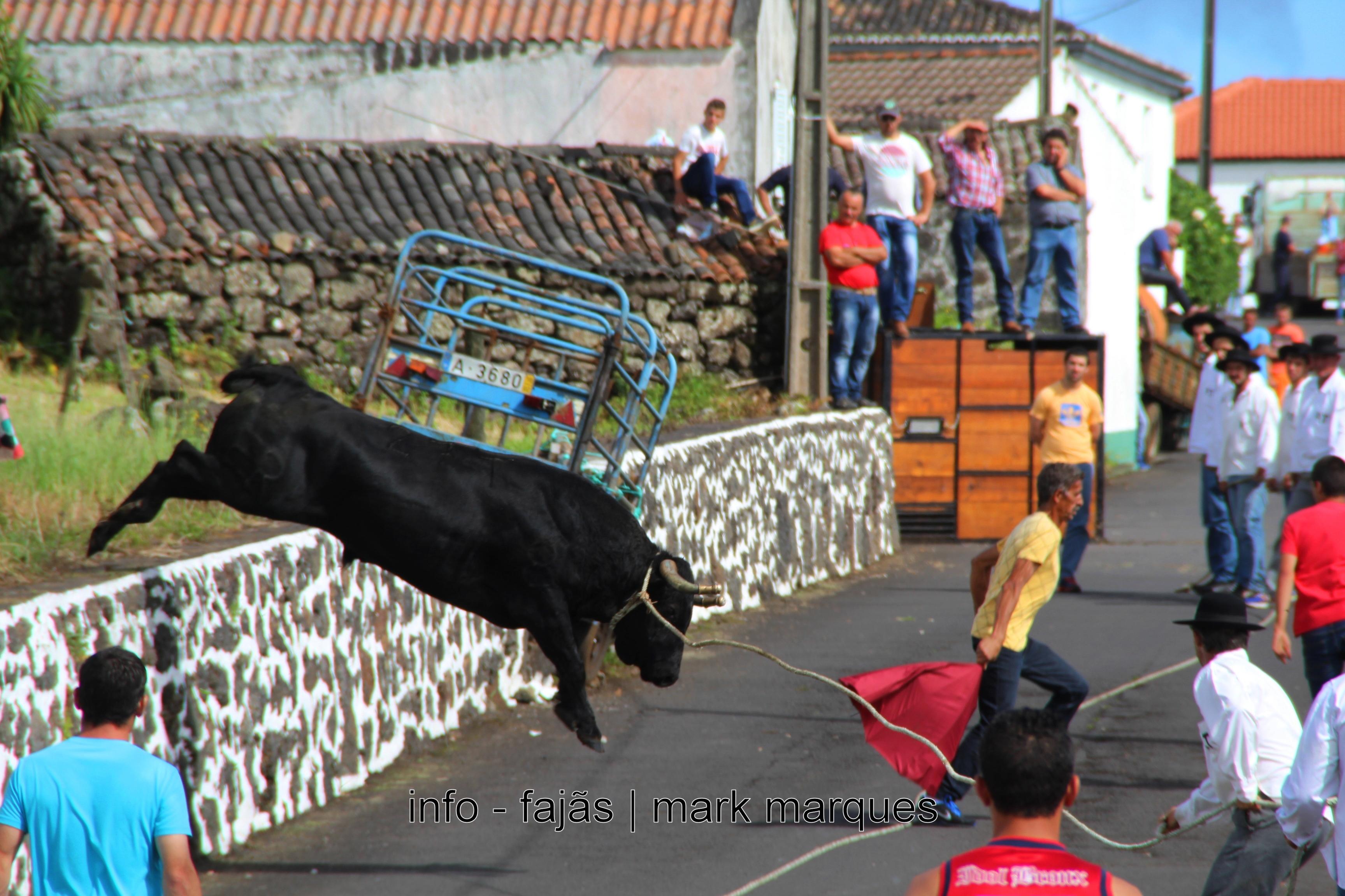 TOURADA À CORDA – BEIRA – VELAS (Ilha de São Jorge) (reportagem fotográfica)