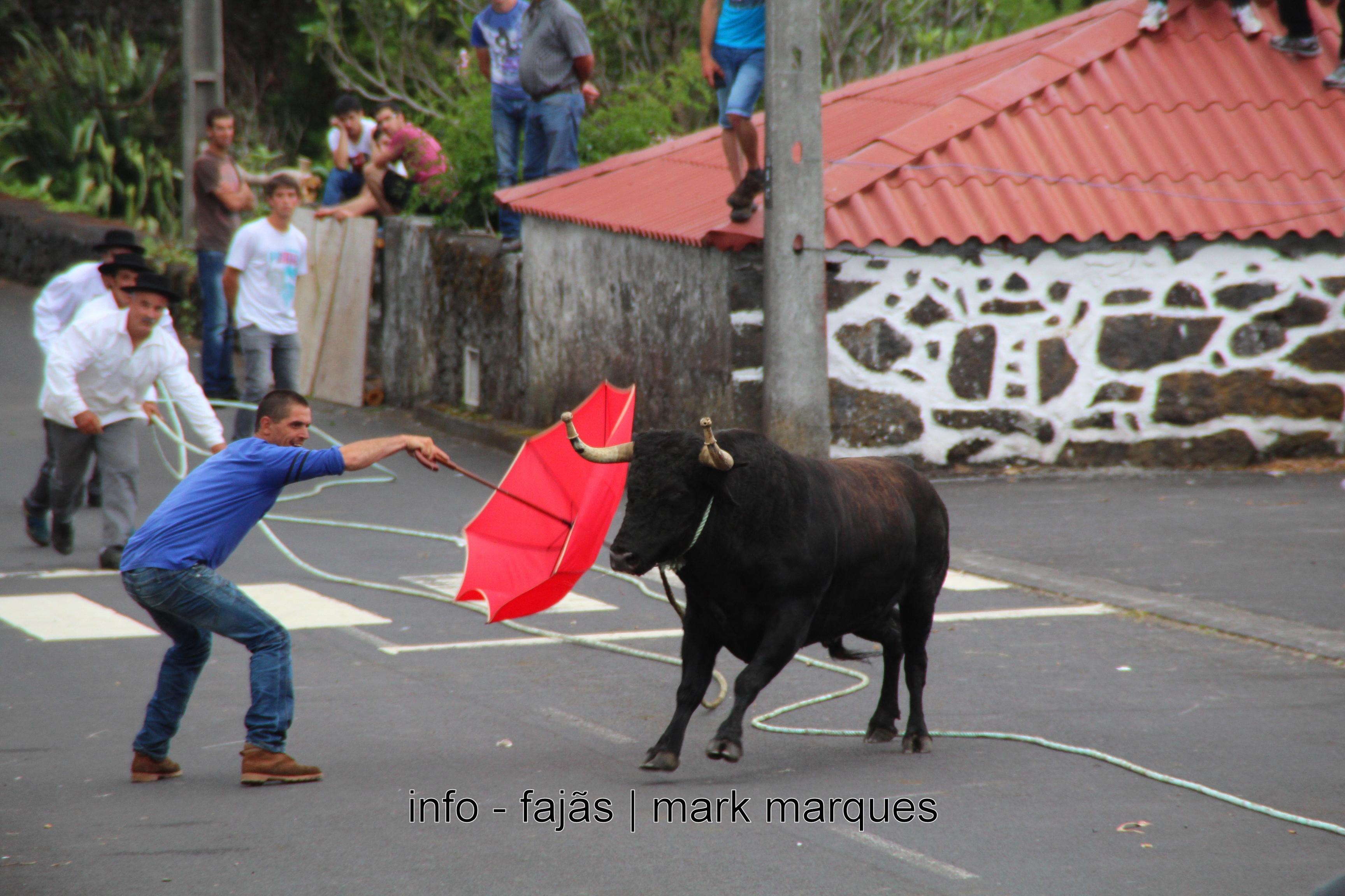 TOURADA À CORDA NOS TERREIROS (MANADAS) – ILHA DE S. JORGE. (reportagem fotográfica)