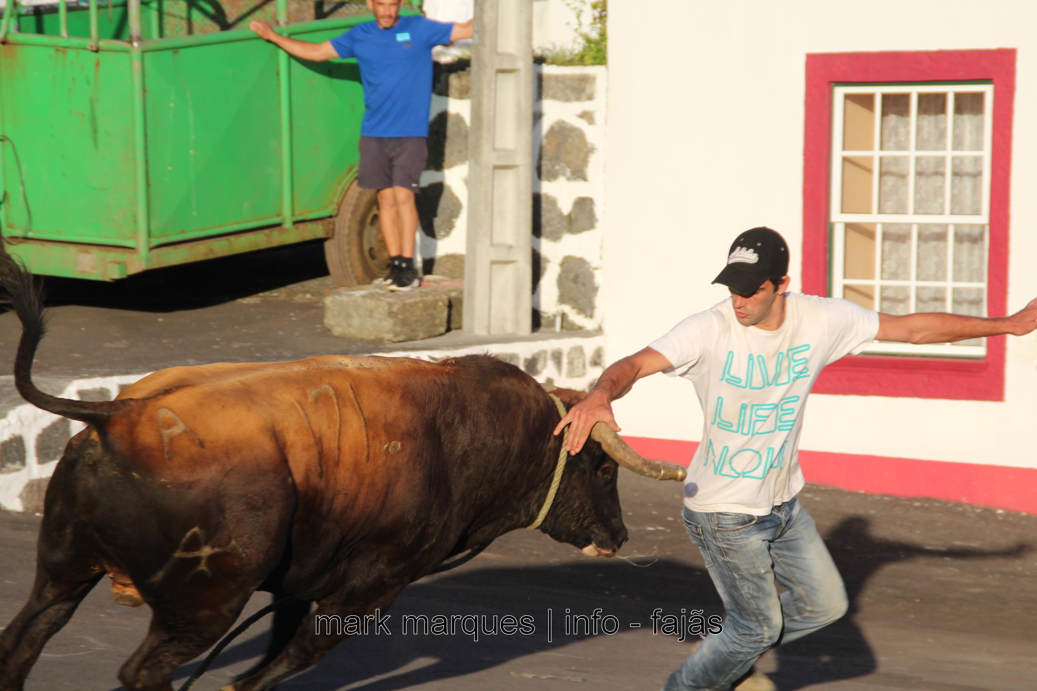 Novas regras que valorizam a tradição da tourada à corda nos Açores já publicadas