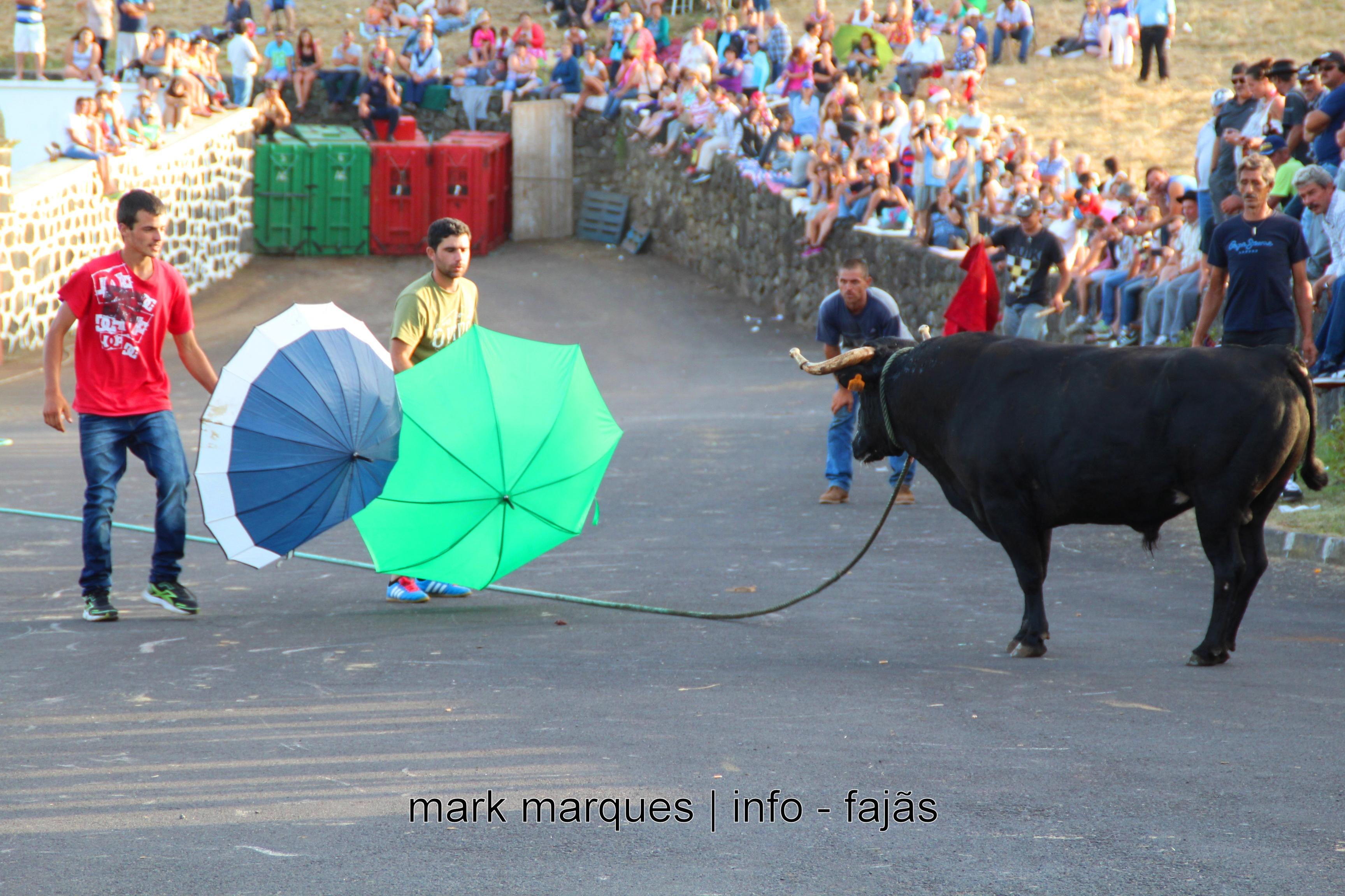 TOURADA À CORDA – ROSAIS – ILHA DE SÃO JORGE (AÇORES). (reportagem fotográfica)