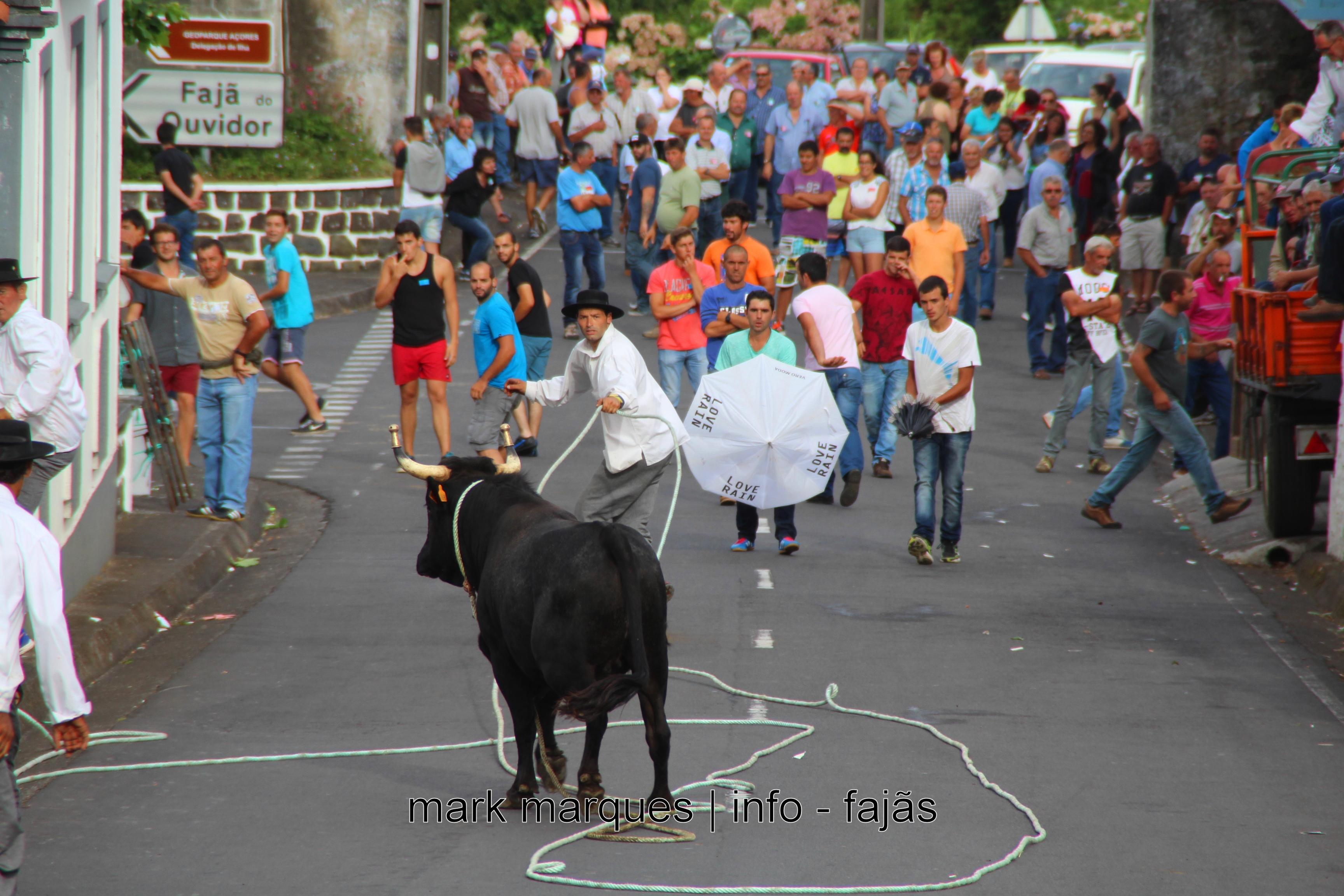 Reforço da segurança das touradas à corda e do bem-estar animal, proposto pelo Governo dos Açores