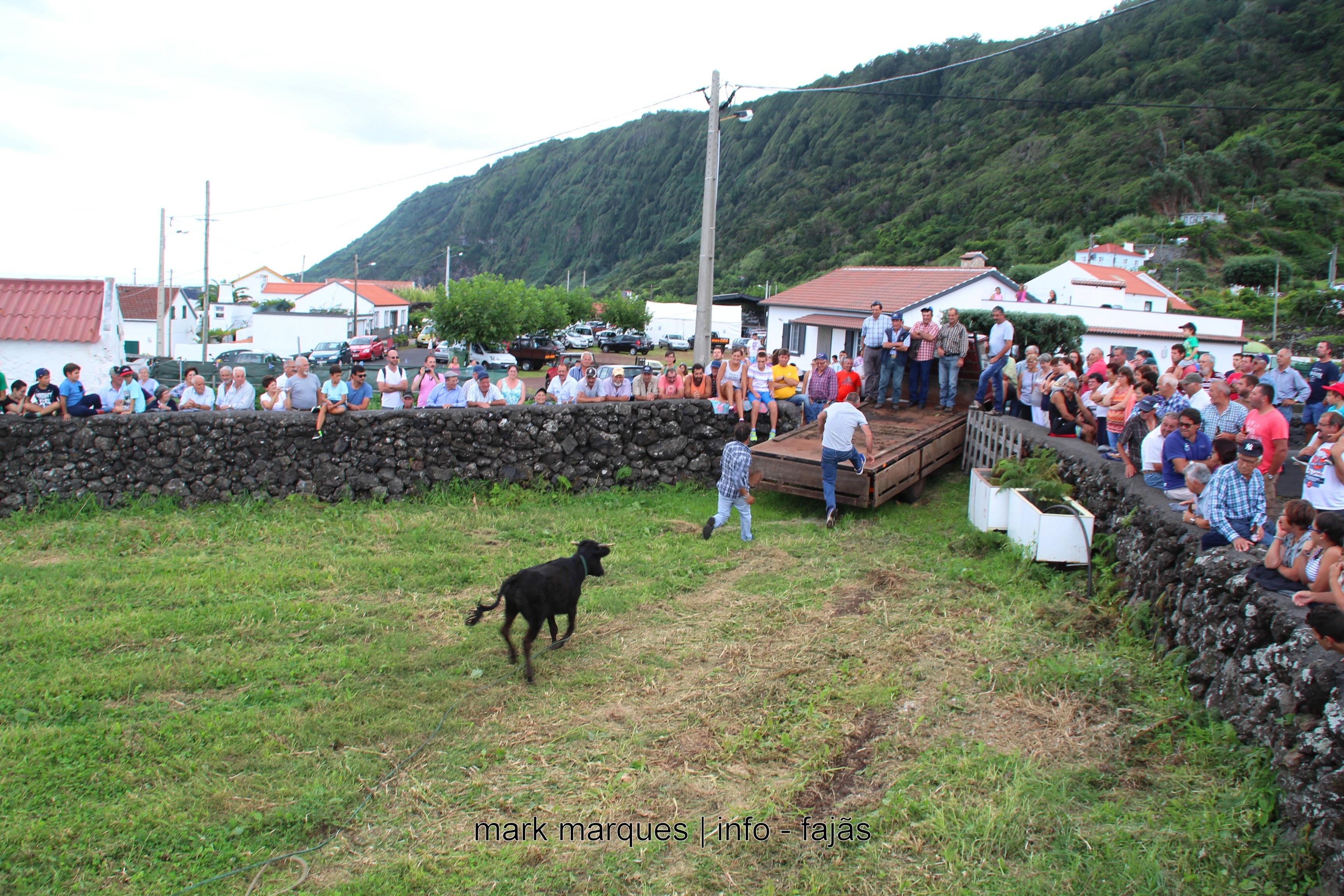 GARRAIADA NA FAJÃ DO OUVIDOR (NORTE GRANDE) – ILHA DE SÃO JORGE. (reportagem fotográfica)