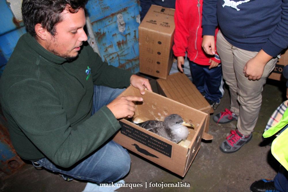 Campanha SOS Cagarro 2016 decorre nos Açores até 15 novembro