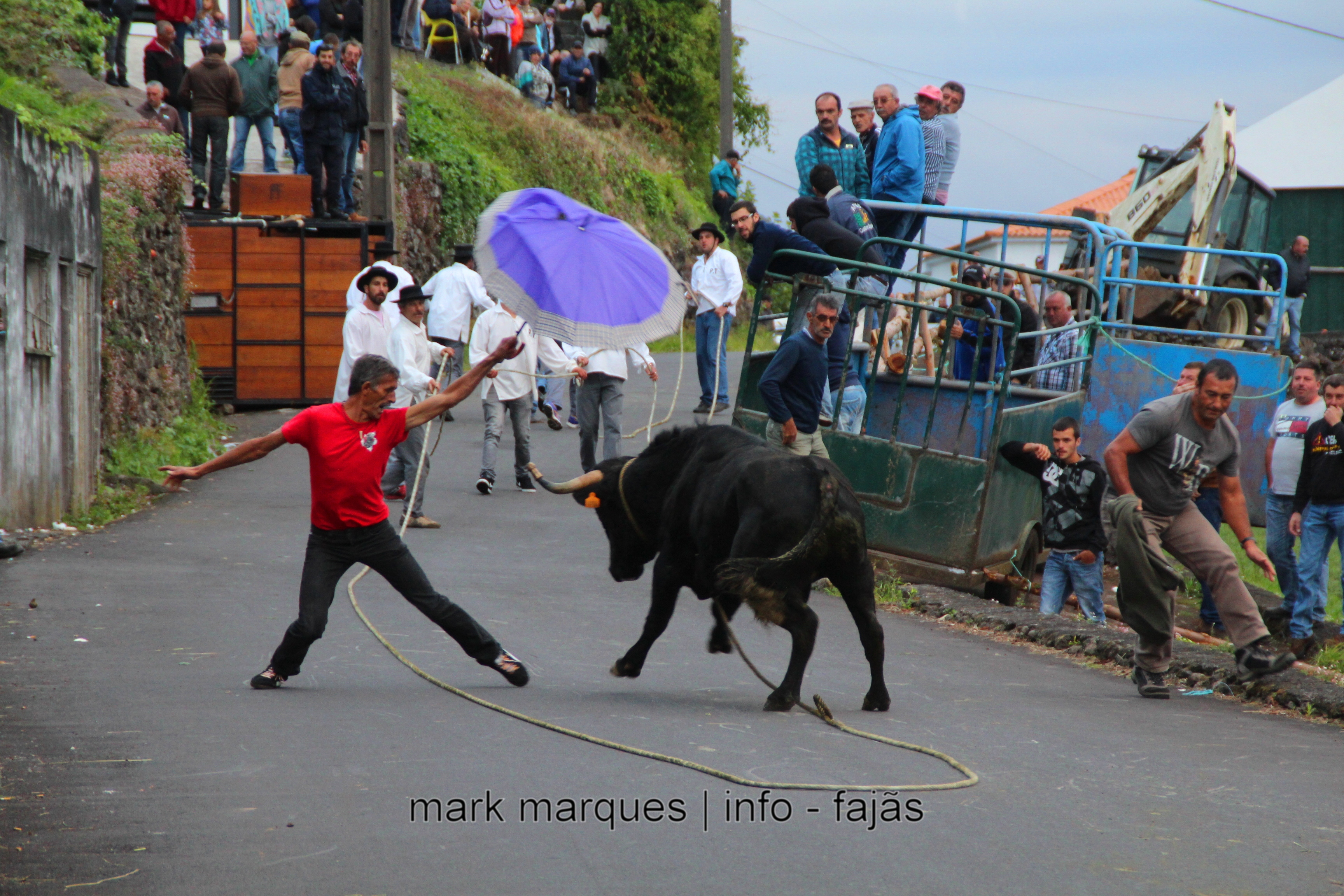 TOURADA À CORDA – PORTAL / RIBEIRA SECA – ILHA DE SÃO JORGE. (reportagem fotográfica)