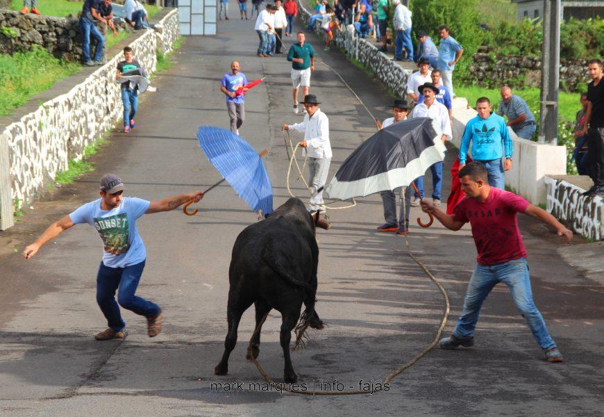 TOURADA À CORDA – RELVA / BEIRA – Ilha de São Jorge (c/ reportagem fotográfica)