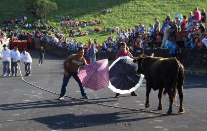 TOURADA À CORDA (II) FESTA DE ROSAIS 2017 – Ilha de São Jorge (c/ reportagem fotográfica)