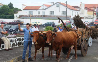 BODO DE LEITE – NORTE PEQUENO – Ilha de São Jorge (c/ reportagem fotográfica)