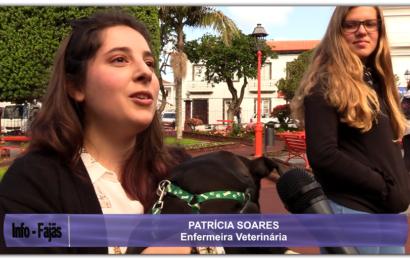 CAMPANHA DE ADOÇÃO ANIMAL – Jardim da República – Vila das Velas – Ilha de São Jorge (c/ vídeo)