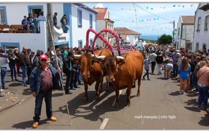CORTEJO DO BODO DE LEITE EM SANTO ANTÃO (desfile dos carros de bois) – Ilha de São Jorge (c/ vídeo)