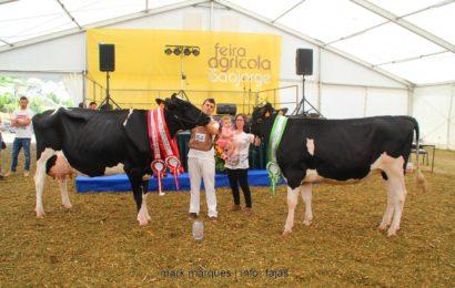 FEIRA AGRÍCOLA SÃO JORGE 2018 – (Concurso de Bovinos – Holstein /Frísia) – Ilha de São Jorge (c/ reportagem fotográfica)