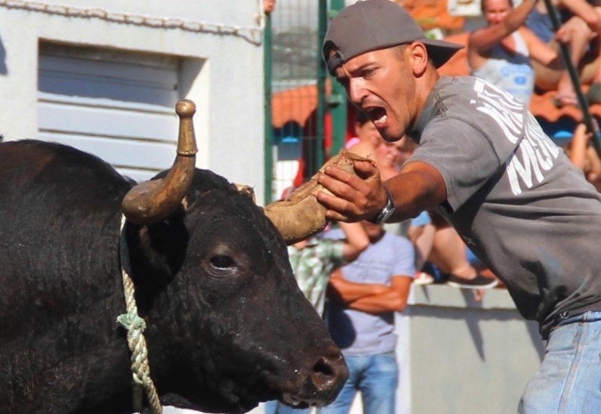 TOURADA À CORDA EM SANTO AMARO – Ilha de São Jorge (c/ reportagem fotográfica)
