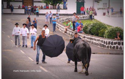 TOURADA À CORDA – Norte Pequeno – Ilha de São Jorge (c/ reportagem fotográfica)