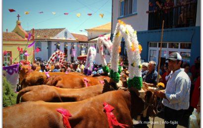 FESTA E BODO DE LEITE – VILA DO TOPO – Ilha de São Jorge (c/ vídeo)