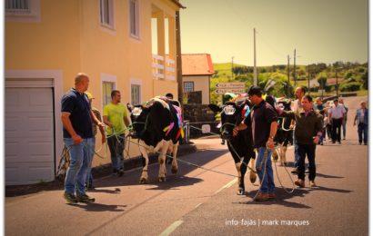 FESTA DO GADO NA SEXTA-FEIRA DA TRINDADE – Norte Pequeno – Ilha de São Jorge (c/ reportagem fotográfica)