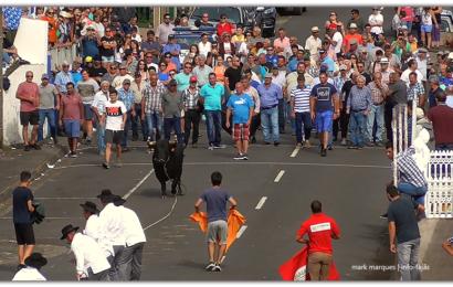 TOURADA À CORDA – Concurso de Ganadarias – Norte Pequeno – Ilha de São Jorge (c/ vídeo)