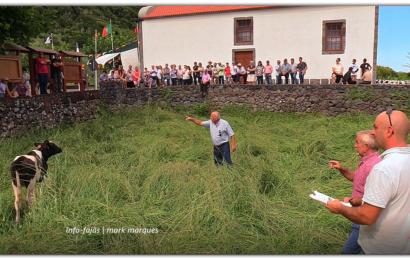 TRADICIONAIS ARREMATAÇÕES – Festa na Fajã dos Cubres – Ilha de São Jorge (c/ vídeo)